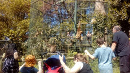 Taking in the animals at Thrigby Hall Wildlife Gardens.