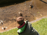 Mason feeding the ducks.