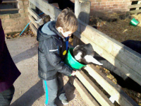 Mason feeding the goats.